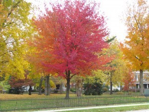 A colorful tree at Lane Place