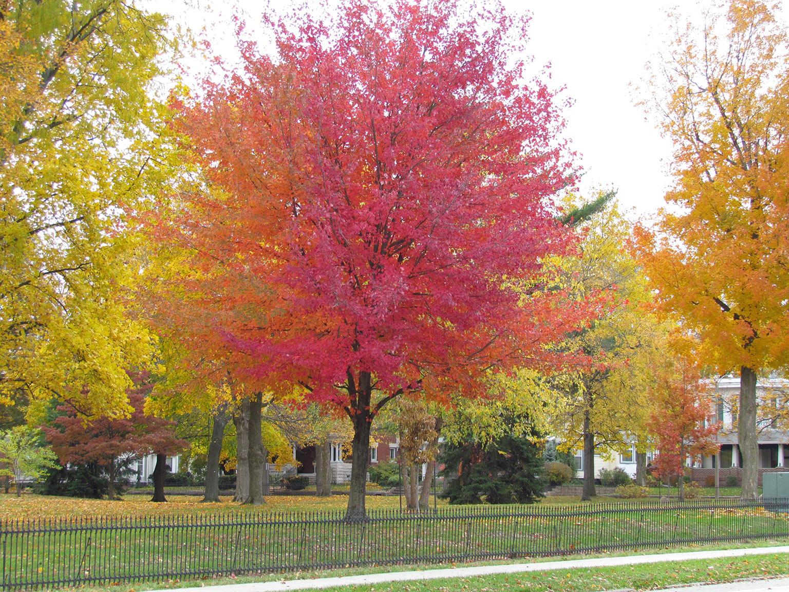 Indiana montgomery county linden - Indiana Montgomery County Linden 51