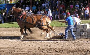 2019 Montgomery County 4-H Horse Pull