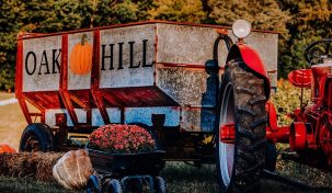 Oak Hill Corn Maze and Tree Farm