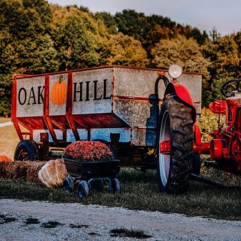 Oak Hill Corn Maze and Tree Farm